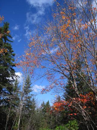 Blue sky fall