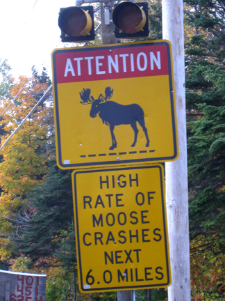 Moose crash sign