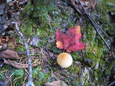 Mushroom and leaf
