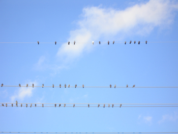 Birds of a featherjpg