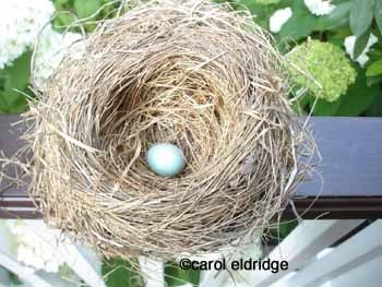 Nest_with_blue_egg