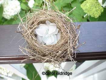 Seaglass_nest