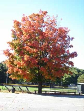 Falltree_2