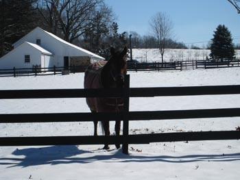 Horse_neighbor