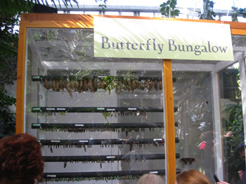 Butterfly_bungalow