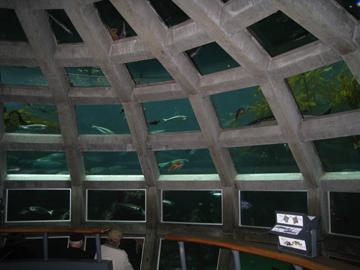 Inside_aquarium