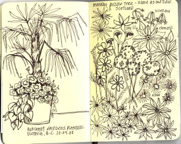 Butchart_gardens_sketch_2