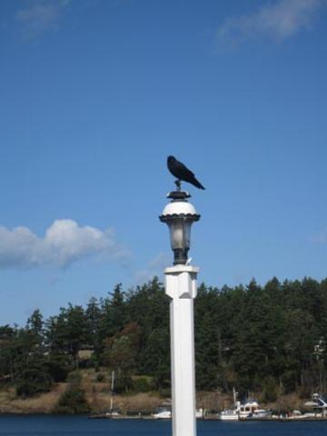 Mr_crow
