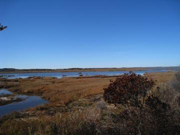 Marsh_land