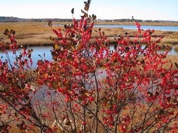 Red_marsh