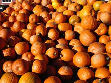 Pumpkin_pile